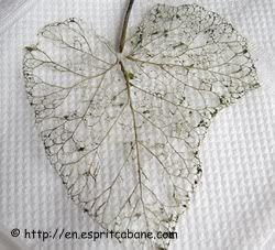Zelf skelet-bladeren maken - Fimo- en ander creatief gefröbel