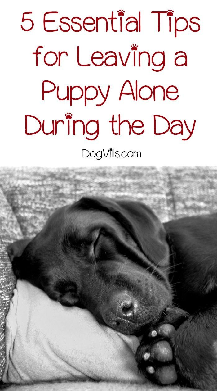 Leaving a puppy alone during the day requires a little planning, but it can be done. Check out our must-know tips to make it a success!