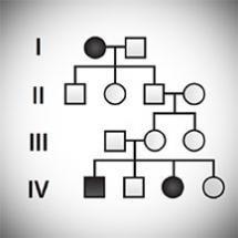 Mendelian Genetics, Probability, Pedigree, and Chi-Square Statistics | HHMI's BioInteractive