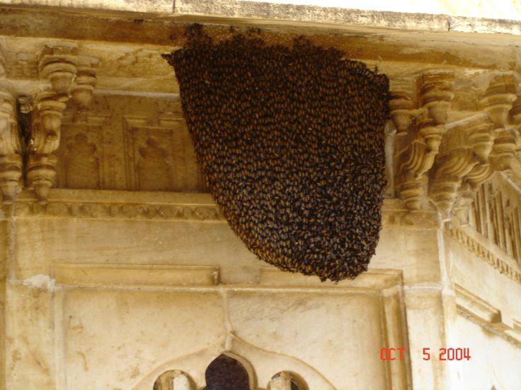 Bees: Bees Hives, Bees Thes, Bees Swarm, Bees Varia, Bees A Swarm, Bees Keep, Free Bees, Beautiful Bees, Honey Bees