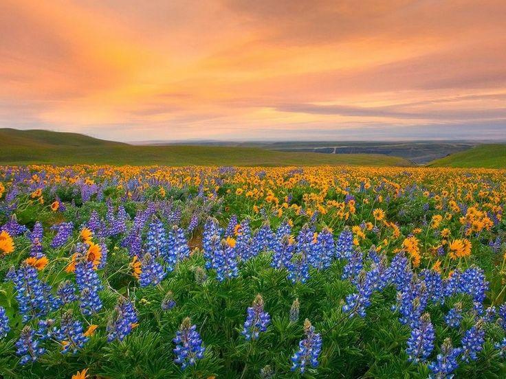 Parque Nacional Valle de las flores, India