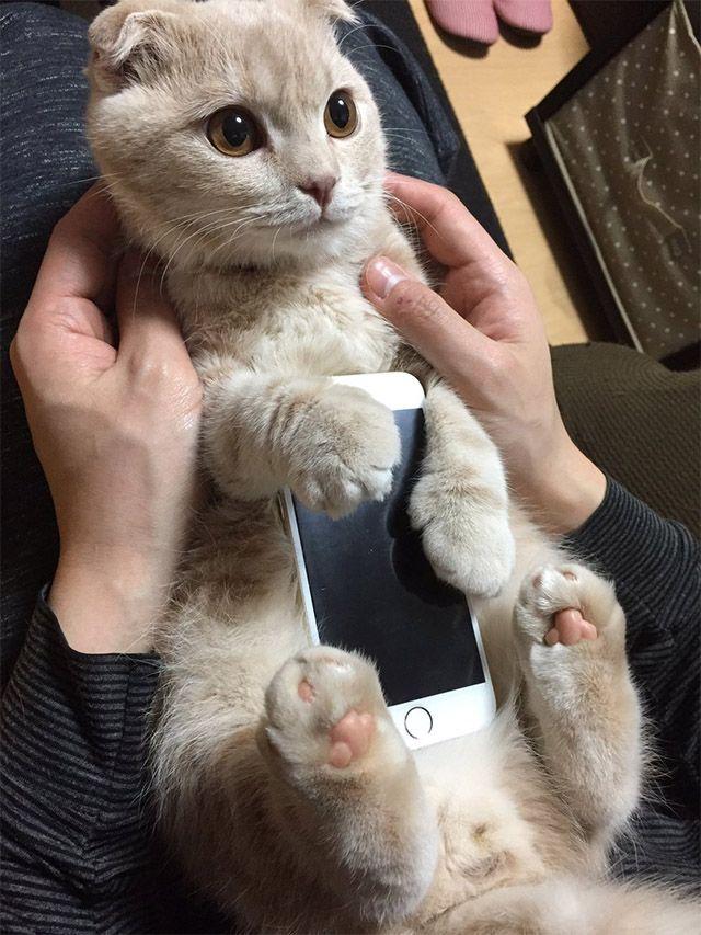 「どこで買えますか!?」一点もの、新発売のiPhoneケースが可愛すぎる  –  grape [グレイプ]