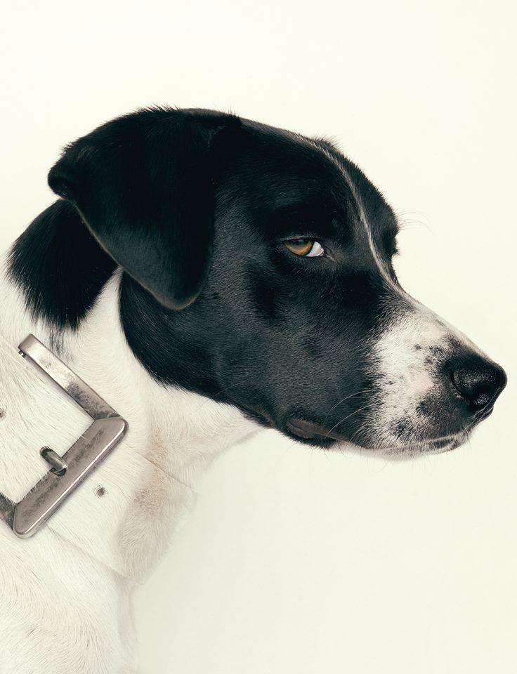 Design dog