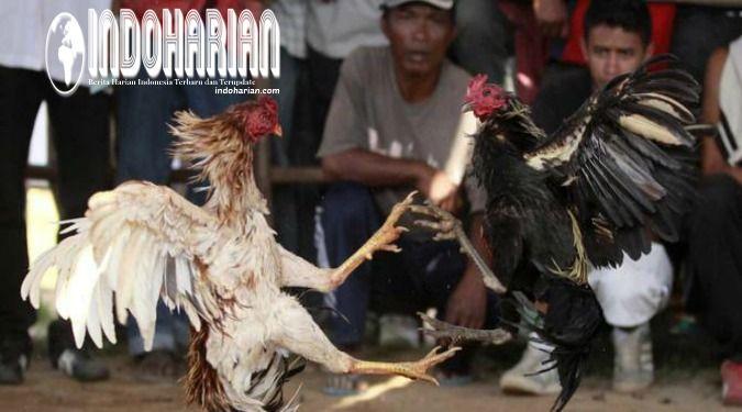 Berita Indonesia Terbaru dan Terupdate serta Analisis dari INDOHARIAN.com   Politik, Berita Dunia Terbaru, Foto, Video, Ulasan Teknologi, Kesehatan, Alam dan Entertaiment News  #beritahangat #beritaharian #CrewZ #infoterkini #infoharian #infodahsyat #beritautama #beritaterkini #beritaseru #IndoHarian #beritaupdate #Videopopuler #teknologi #kriminal #politik