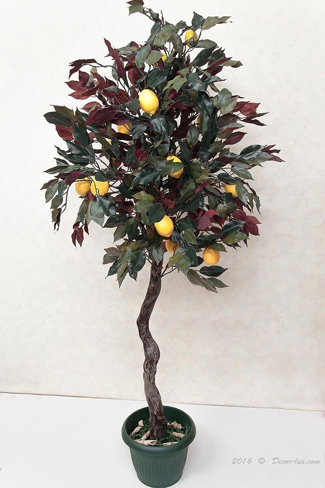 Лимон экзотик дерево.