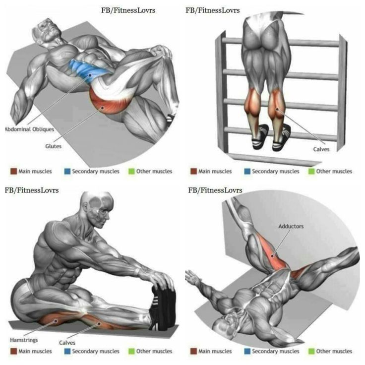 1164 best Anatomía del Ejercicio images on Pinterest | Excercise ...