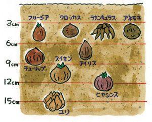 秋植え球根の育て方【ガーデニング】デビューにおすすめ♥ - NAVER まとめ