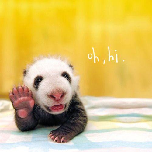 Simpatica imagen de oso panda saludando  [29-11-16]
