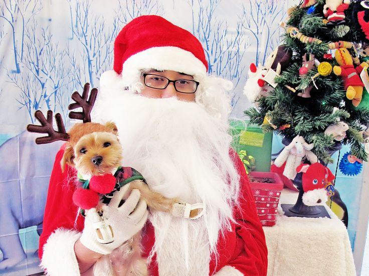 Santa's little helper models the latest in antler accessories.