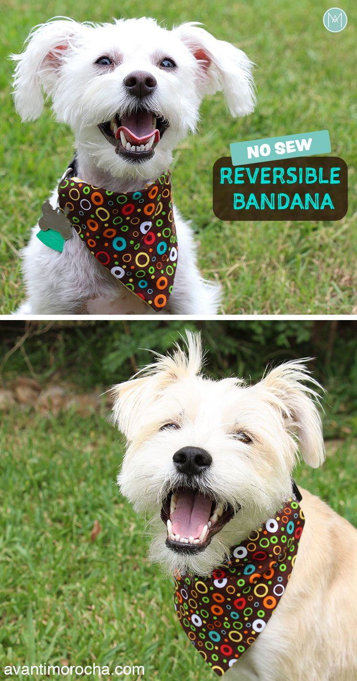 DIY No Sew Reversible Dog Bandana | Bandana de perro