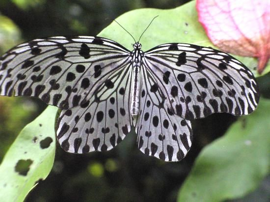 Kuala Lumpur Butterfly Park (Malaysia): Address, Phone Number, Tickets & Tours, Attraction Reviews - TripAdvisor