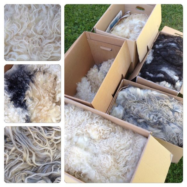 raw fleece felting