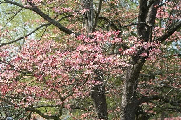 spring timeHello Spring, Spring Time, Beautiful Spring, Perpetual Spring, Spring Blossoms