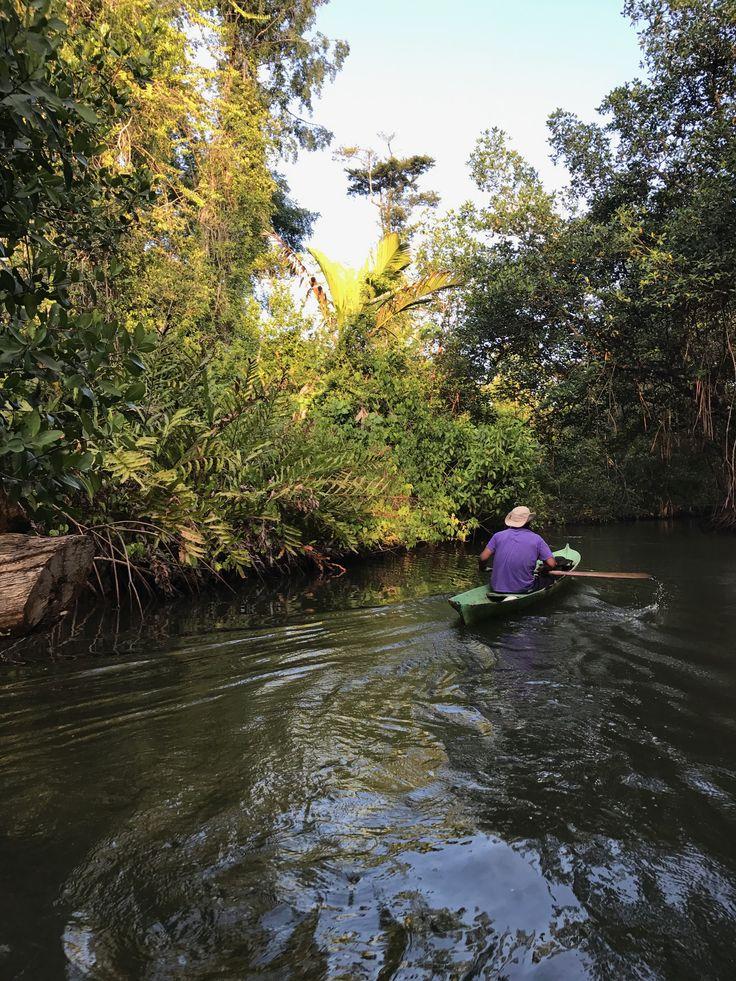 Sloth´s water trail in Bahia Honda, Bastimentos Island Marine National Park, Bocas del Toro - Panama
