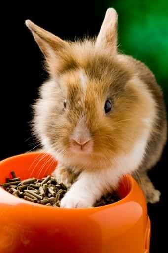 Pellet sprawdza się również jako wyściółka boxów i klatek dla królików!