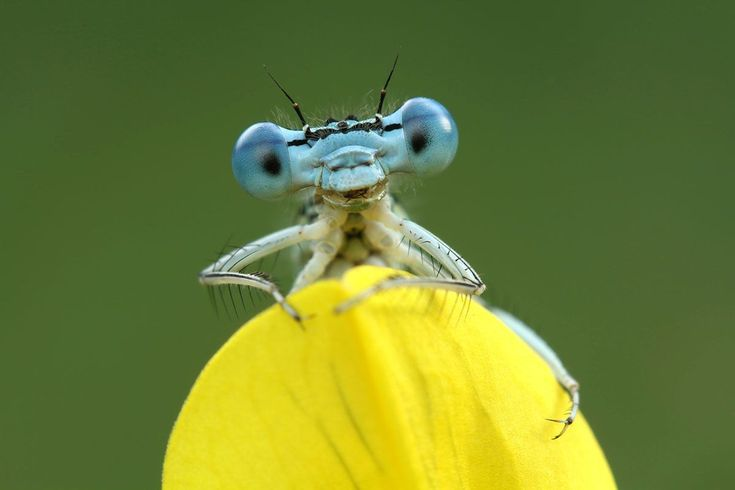 Professional Photography Course : Unit 5: Broadening Your Subject Range : 5.3: Macro Photography - Insect Photo Tips