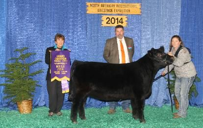 Contact Us, CLA, Indiana Lowline Angus cows