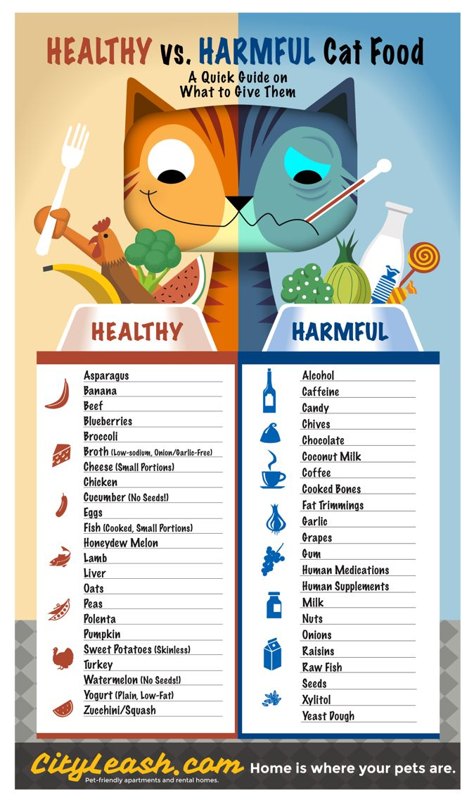 Printable Guide on Healthy and Harmful Cat Food - http://blog.cityleash.com/healthy-and-harmful-foods-for-cats/