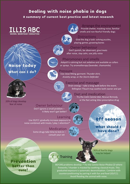 Best  Dogs And Fireworks Ideas On   Dogs And