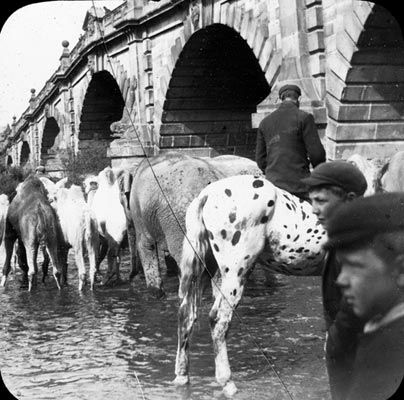 Sanger's Circus animals (including elephant) drinking from the River Severn at the English Bridge. The river looks either low or silted. Shrewsbury, Shropshire