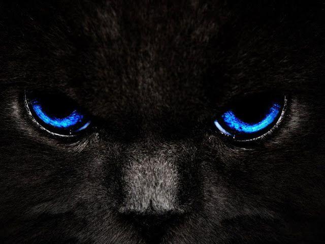 خلفيات داكنة عالية الدقة لاجهزة الكمبيوتر مداد الجليد Cat With Blue Eyes Black And Blue Wallpaper Eyes Wallpaper