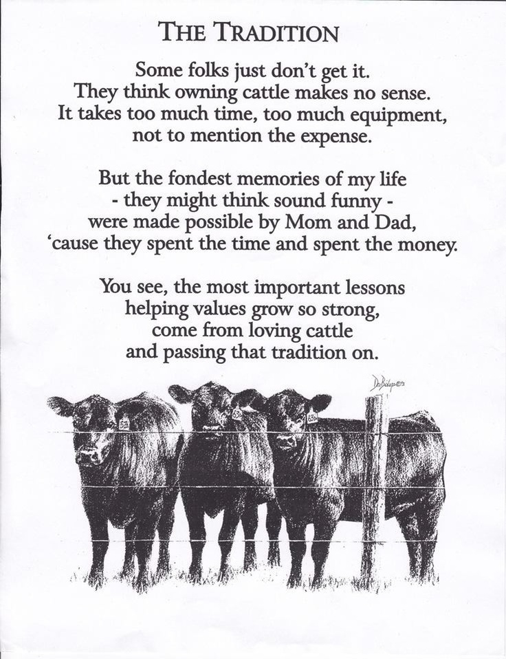 The tradition of show cattle