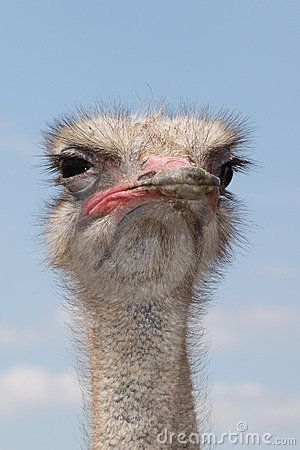 Ostrich Suspicious... Why am I laughing so hard at this?!?!!