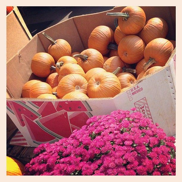 Butler Farm Market in Renfrew, PA