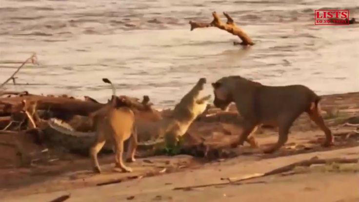 Chưa bao giờ lại được xem những video về động vật thú vị như thế này, Li...