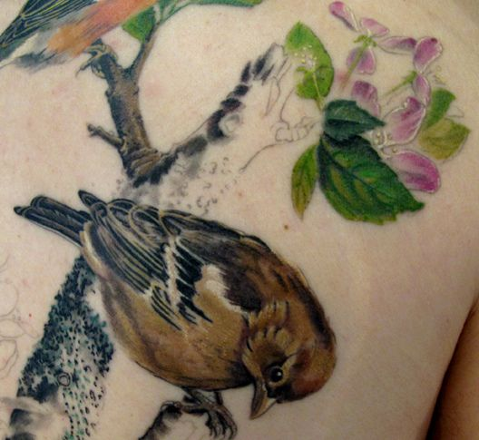 Female chaffinch - in progress by the inimitable Esther Garcia.