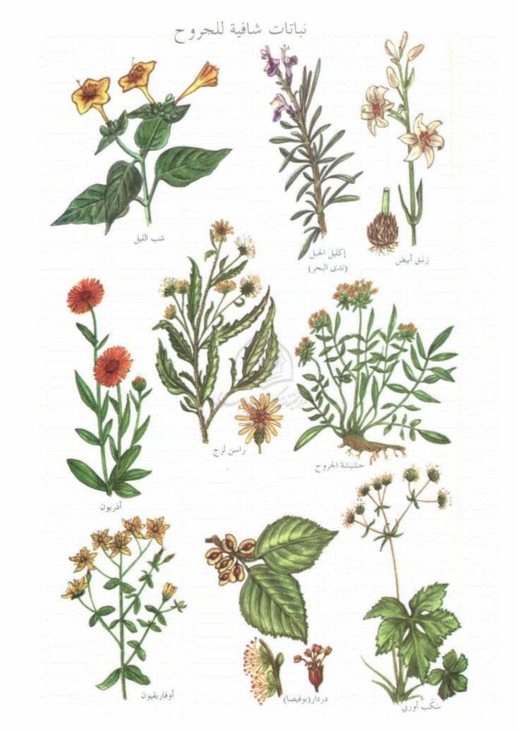موسوعة النباتات المفيدة فريد بابا عيسى Free Download Borrow And Streaming Internet Archive Plants Landscape Internet Archive