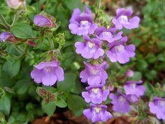 Flores silvestres de color morado, azul y lila   Plantas
