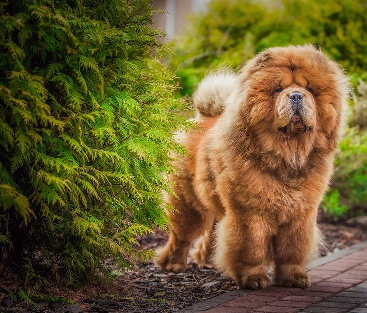 Гончая собака: выбор породы Смотри больше http://kot-pes.com/gonchaya-sobaka-porody-dlya-oxoty/