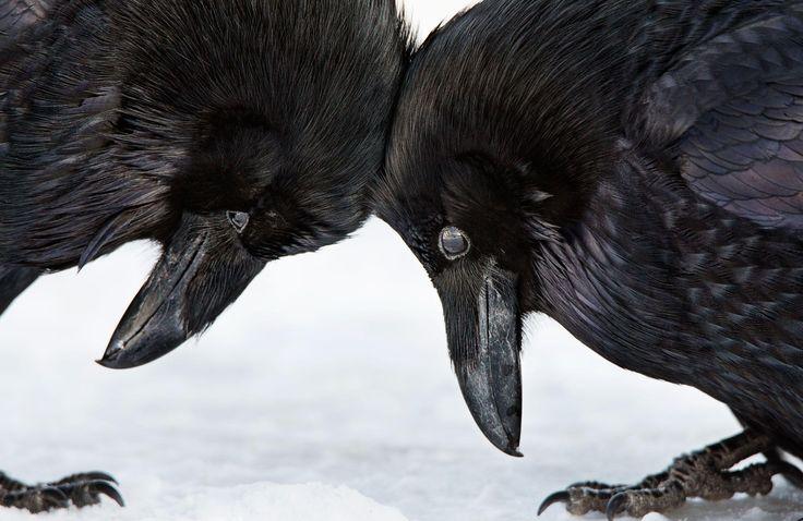 Audubon Photography Awards - Amateur Honorable Mention #PetNook