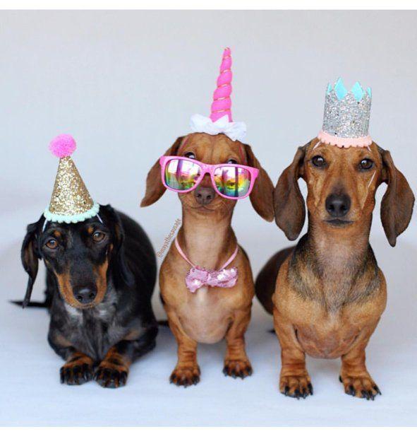 Dog Birthday Dog Costume Dog Birthday Hat Dog Party Etsy Happy Birthday Dachshund Dog Birthday Hat Happy Birthday Dog
