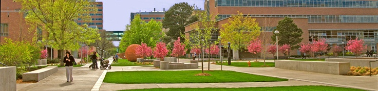 university of denver colorado. wanted seperate anat and phys. courses not combined. But would accept if approved by head of admissions