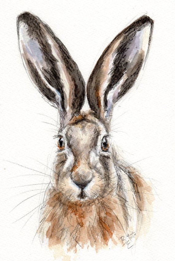 ORIGINAL Watercolour  Wildlife Animal by BelindaElliottArt on Etsy, £24.00 #hare #painting