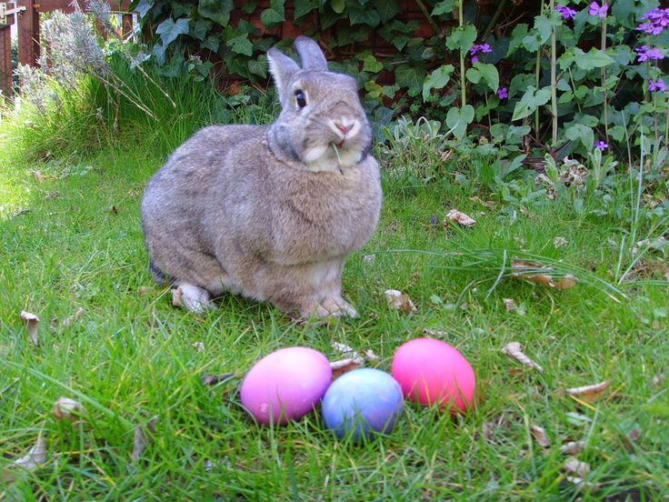 Hallo meine Lieben, ich wünsche euch und euren Liebsten einen wunderschönen Karfreitag :) Genießt den Feiertag und lasst es euch gut gehen :) Viele Ostergrüße sendet euch Cosima :) By Gerbil (Own work) [GFDL (http://www.gnu.org/copyleft/fdl.html) or CC-BY-SA-3.0...