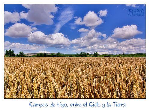 Campos de trigo, entre el Cielo y la Tierra
