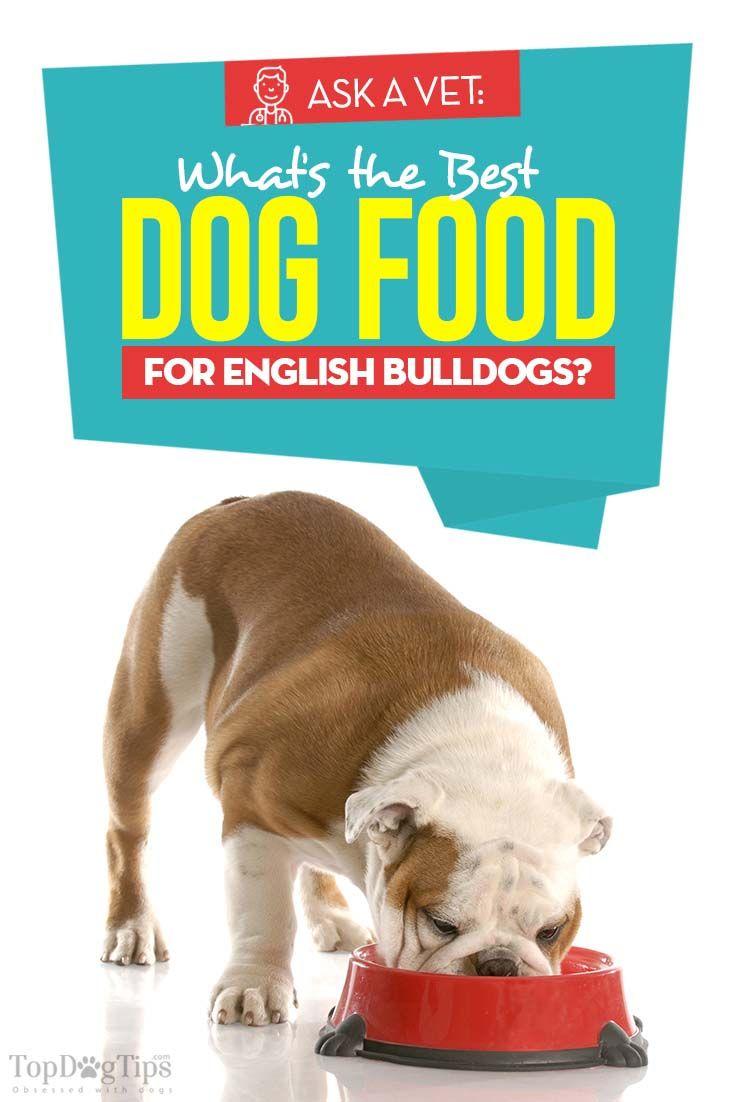Best Dog Food For English Bulldogs 6 Vet Recommended Brands Best Dog Food English Bulldog Puppies English Bulldog Dog