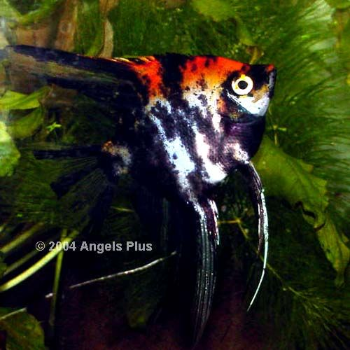17 Best Images About Tropical Fish On Pinterest