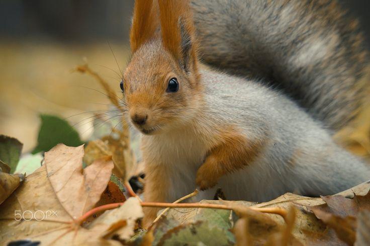 squirrel - null