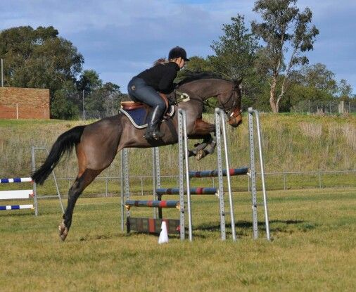 Love this horse to bits and a photo of him in action