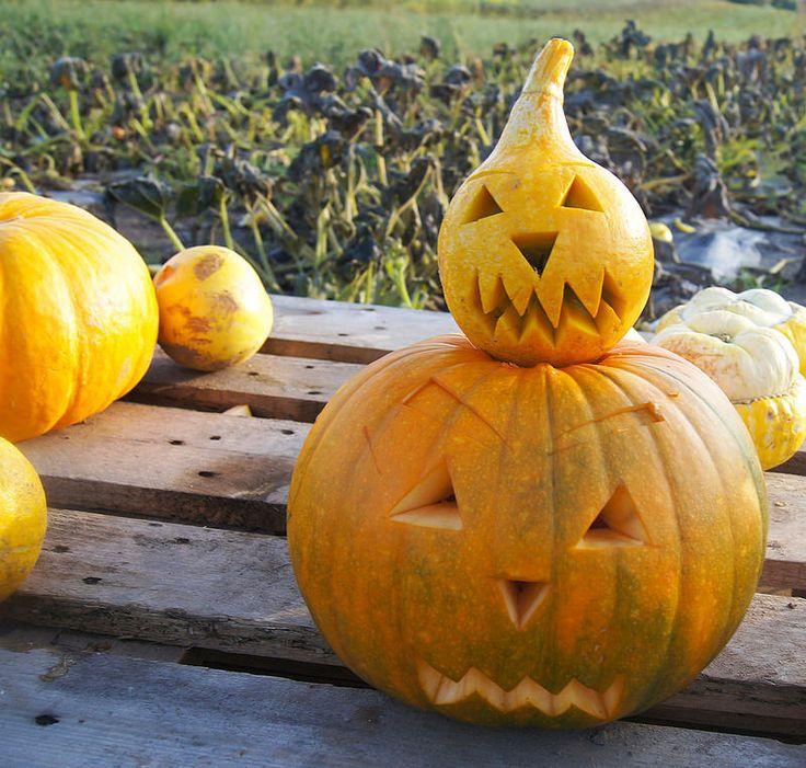 carved pumpkins - happy halloween