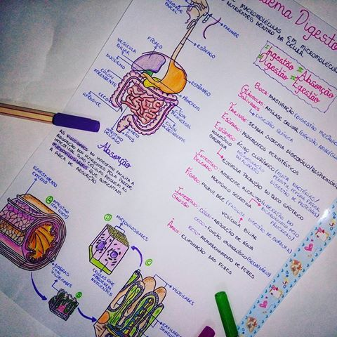 Boooa noite pessoal, finalmente eu postei este resumo. Perdão pela demora, estou passando por algumas peculiaridades na vida, nada grave hehehe Eu gostei bastante, espero que gostem também, amanhã acho que já coloco no drive pra vocês baixarem. O que acharam? Beijos!  #resumos #biologia #biology #enem #vestibular #fuvest #medicina #amorquenaosemed #medjornada #motivacao #honra #foco #estudaqueavidamuda #desenho #draw #human #body #studytime #study #happy #foconojaleco
