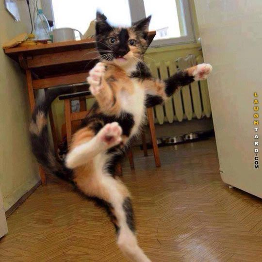 Cat Karate Kick