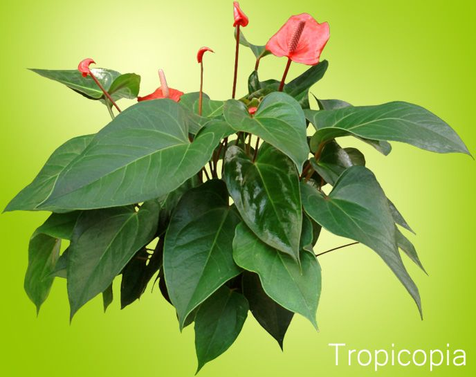 Identifying House Plants By Leaves 7 best house plants for cold rooms images on pinterest