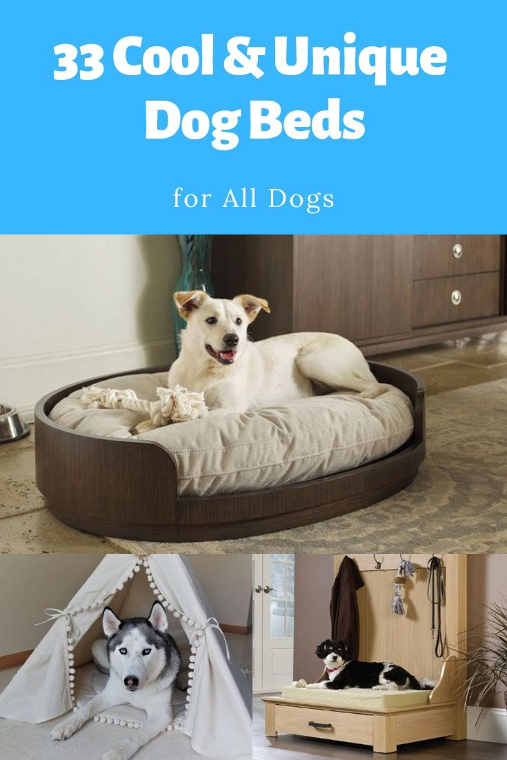 The Greatest Dog Beds For Your Best Friend Unique Dog