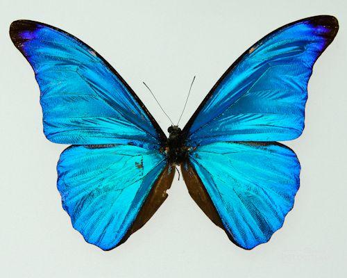 Картинки по запросу фото бабочек