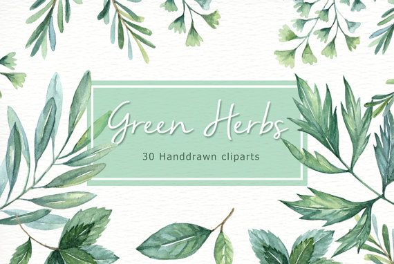 Green Herbs Watercolor Clipart Watercolor Flower Watercolour